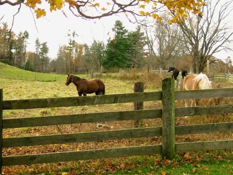 autumnroadfarm10