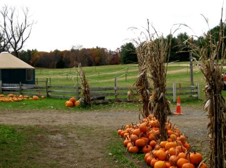 autumnroadfarm11