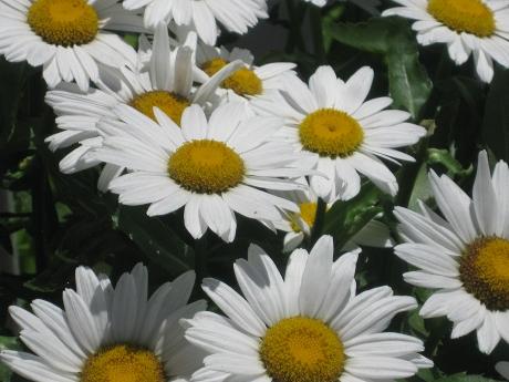 2015ogunquitflower1
