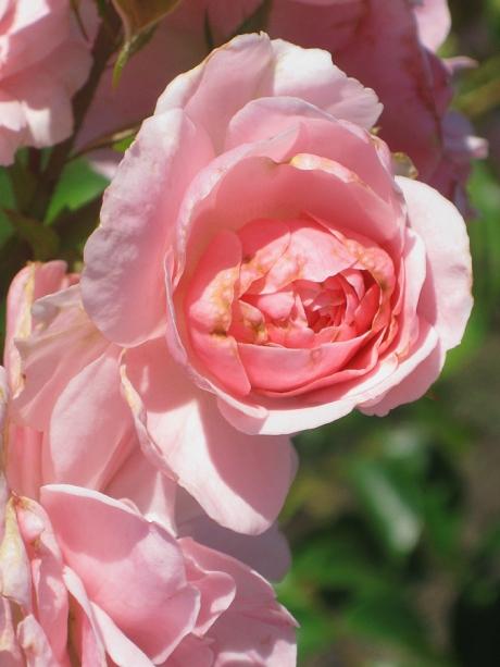 2015ogunquitflower3jpg