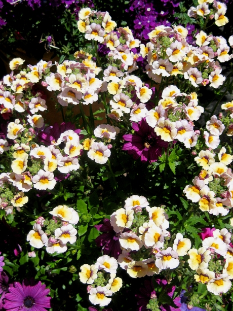 2015ogunquitflower4jpg