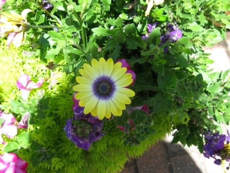 2015ogunquitflower5jpg