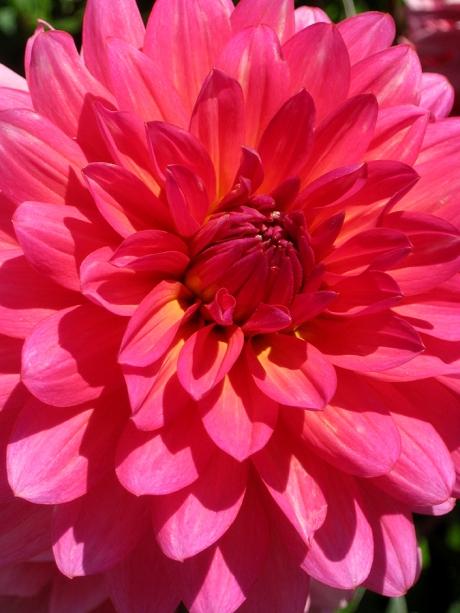 2015ogunquitflower8jpg