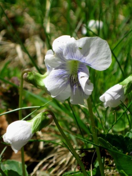 2015springflower