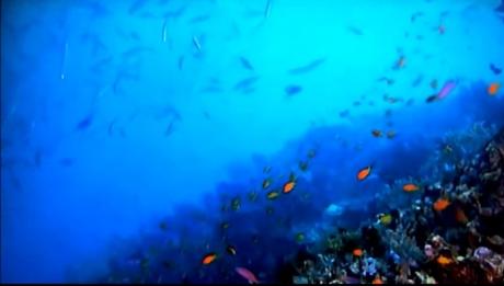 fishoceanschool2