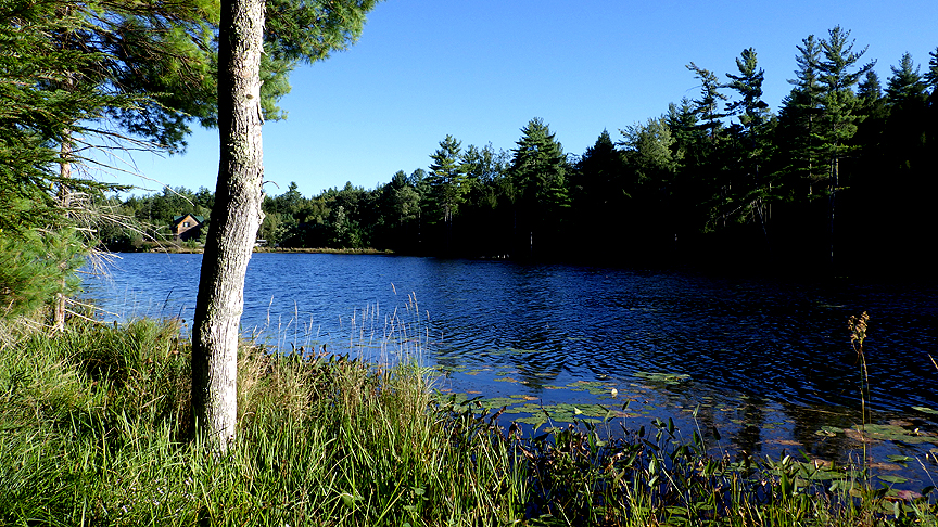 woodpathpond15