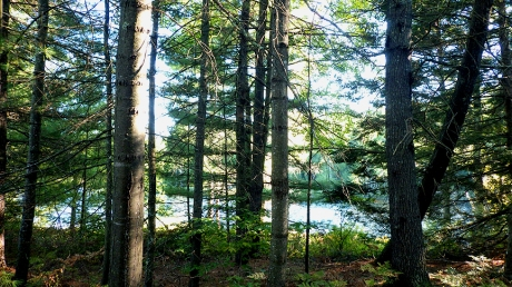 woodpathpond8