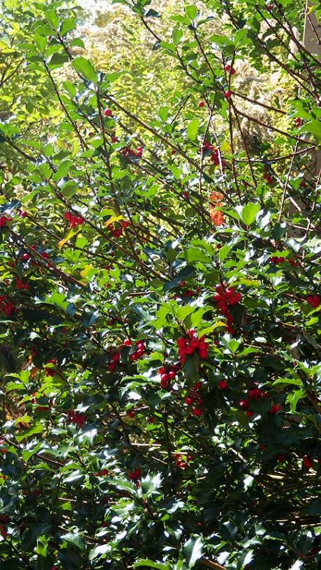2015fallberries2