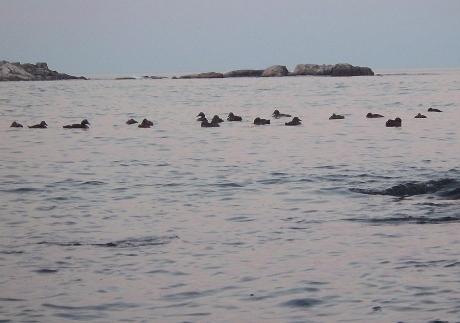 2016pastelocean2
