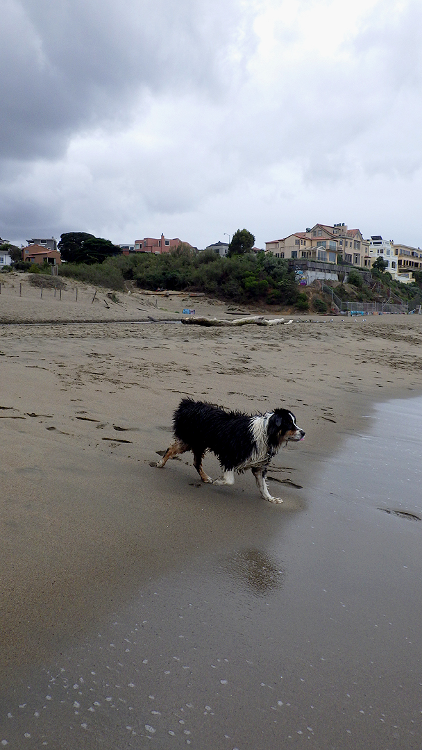 dogsofsanfrancisco24