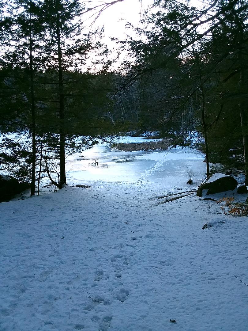 snow2020paw5