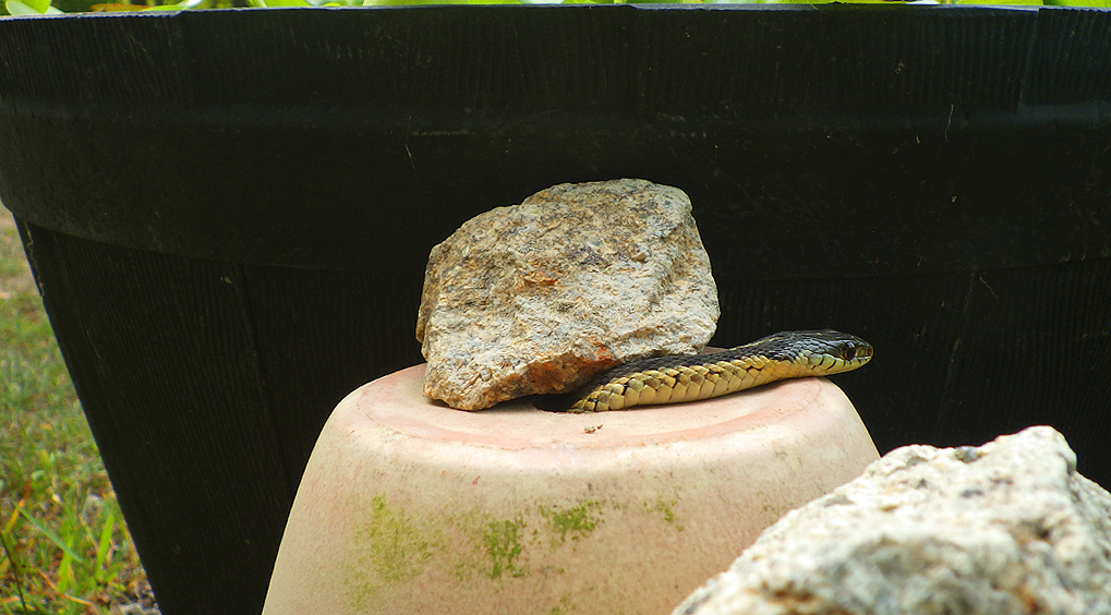 snake1