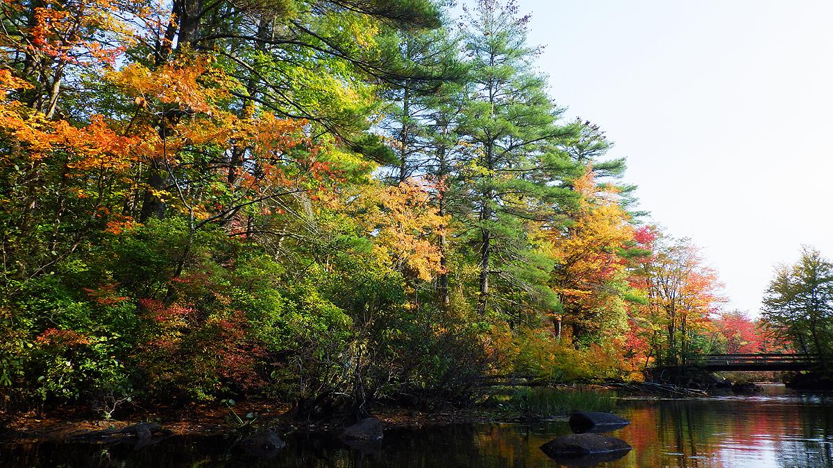 treeswater3